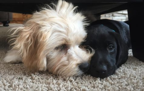 Dogs of the week: best brothers, best buds