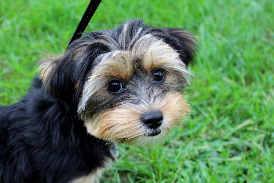 Dog+of+the+week%3A+%E2%80%9CHyper%E2%80%9D+Piper