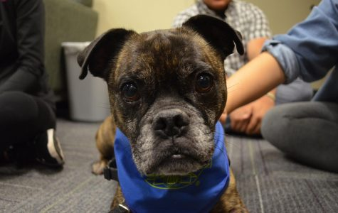 Aiden is the 6 year-old boxer pug who has taken over the hour long therapy dog slot in place of Winston on Monday nights from 4 to 5 p.m. in IWC 267. Aiden loves to sit in peoples laps and give big wet kisses.