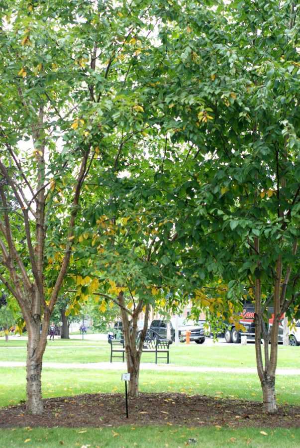 Three Yellow Birch trees were planted in dedication to Derek outside Memorial Hall, these trees hold a special significance to the Harms family as Derek's father, uncle and grandfather ran a wholesale tree nursery. Partnering with the RTTR department, the Harms set up a scholarship in Derek's name.