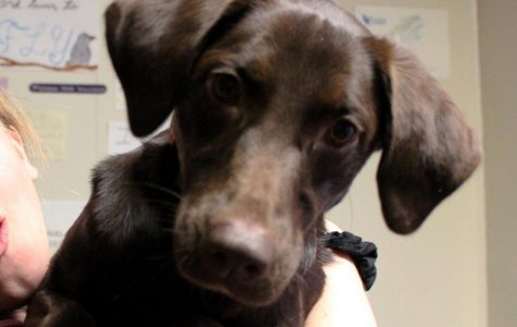 Dog of the week: Jamaica, the lab mix