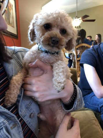 Dog of the week: Gizmo, the dog